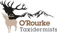 O'Rourke Bros Taxidermists